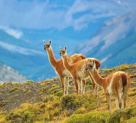 百内国家公园TORRES DEL PAINE / 离开圣地亚哥DEPARTURE FROM SANTIAGO