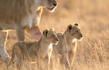 Safari with Confidence: &Beyond