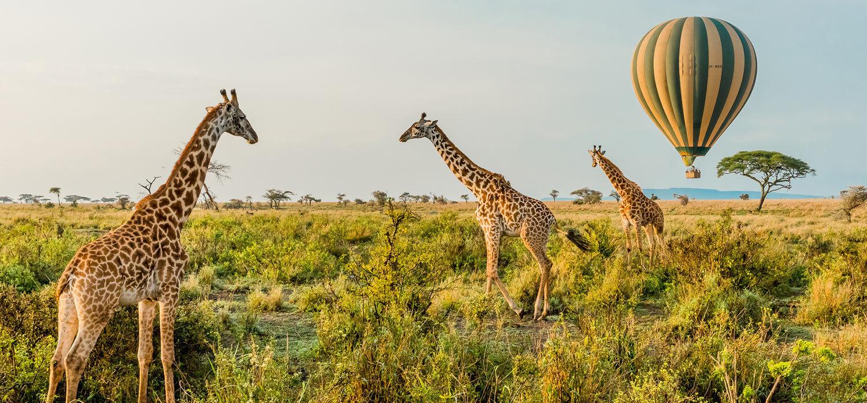 野生动物与游猎的奢华假期