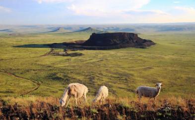 内蒙古|让我们去醉美的草原撒点野