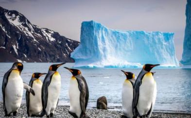 南极 | 重返南大洋 – A21老客户特惠